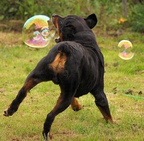 Non d'une bulle !