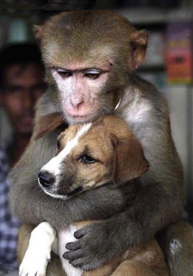 Le singe et...l'homme