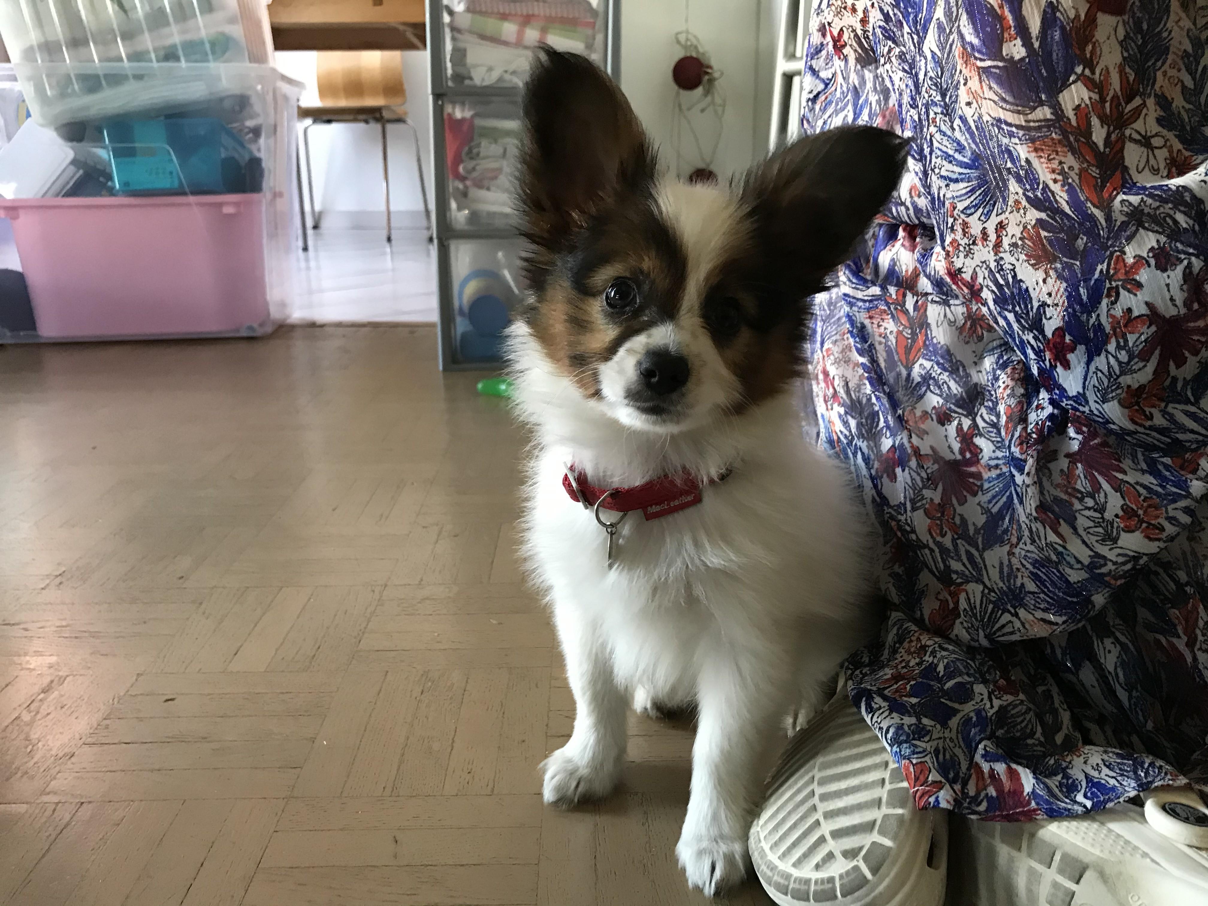 Roméo, papillon, de 2 mois