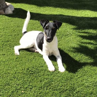 Yvette, fox de 4 mois
