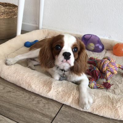 Rudy, cavalier de 7 mois