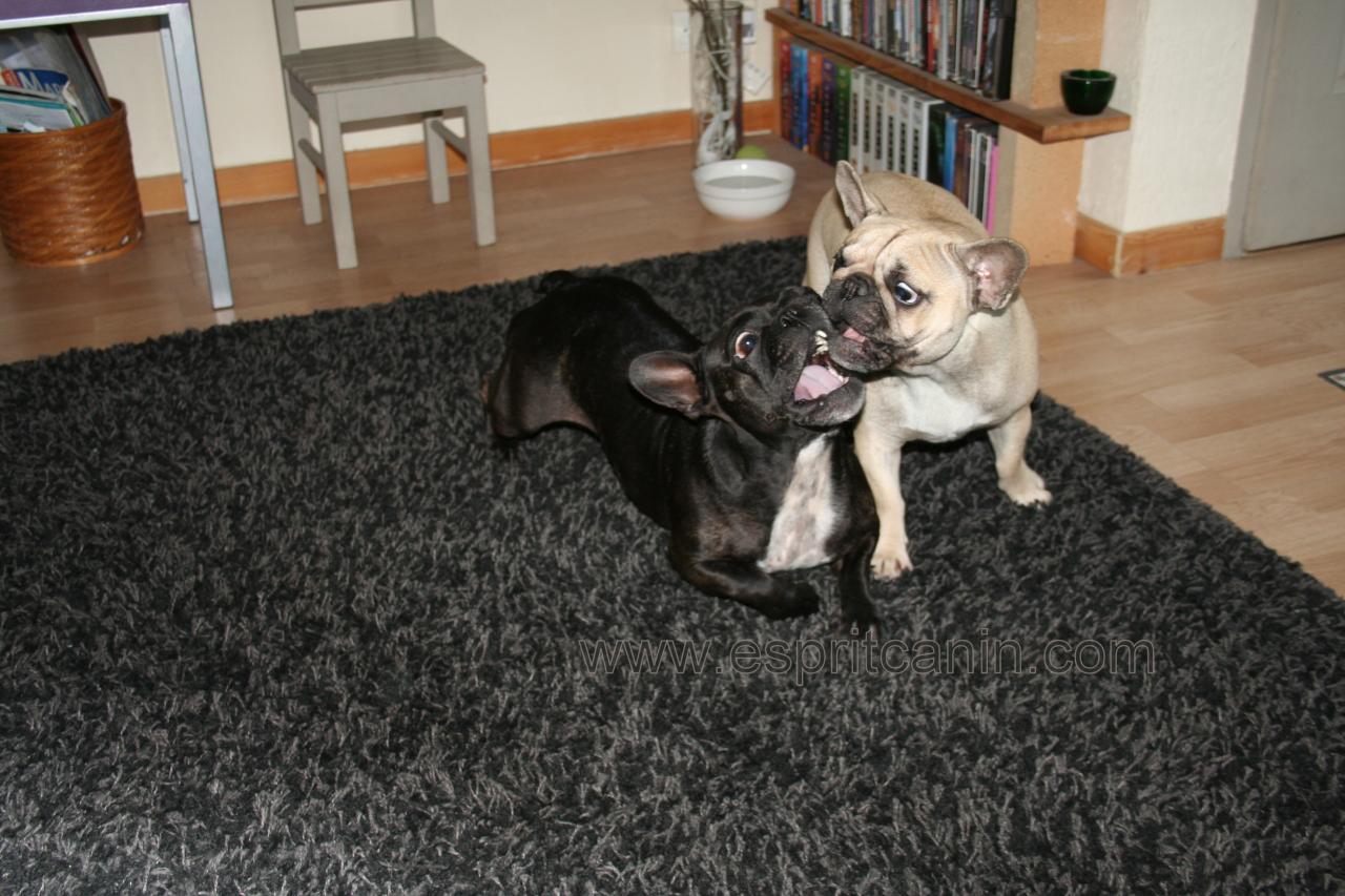 Dita & Lioloo