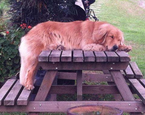 Quelle vie de chien! Trop crevant.