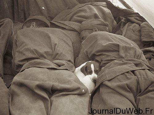 photo-humour-chien-29