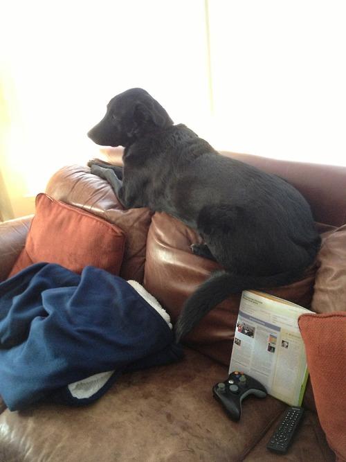 non ! je suis pas sur le canapé !