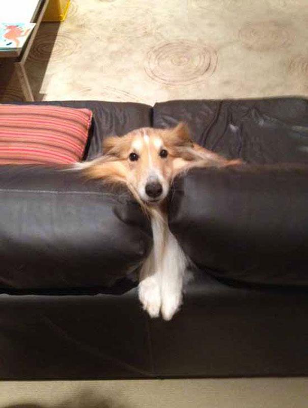 bah non ! je suis pas sur le canapé