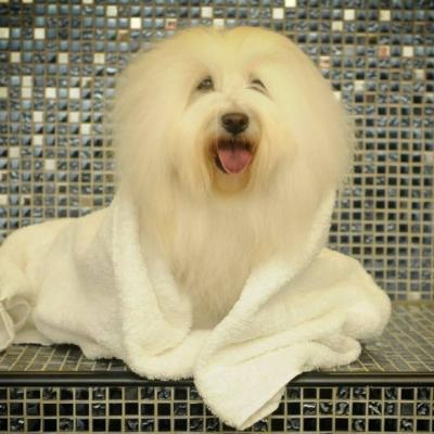 Oh my dog le spa canin le plus luxueux du monde exact780x585 l