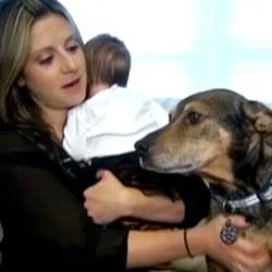 un-chien-sauve-un-bebe.jpg